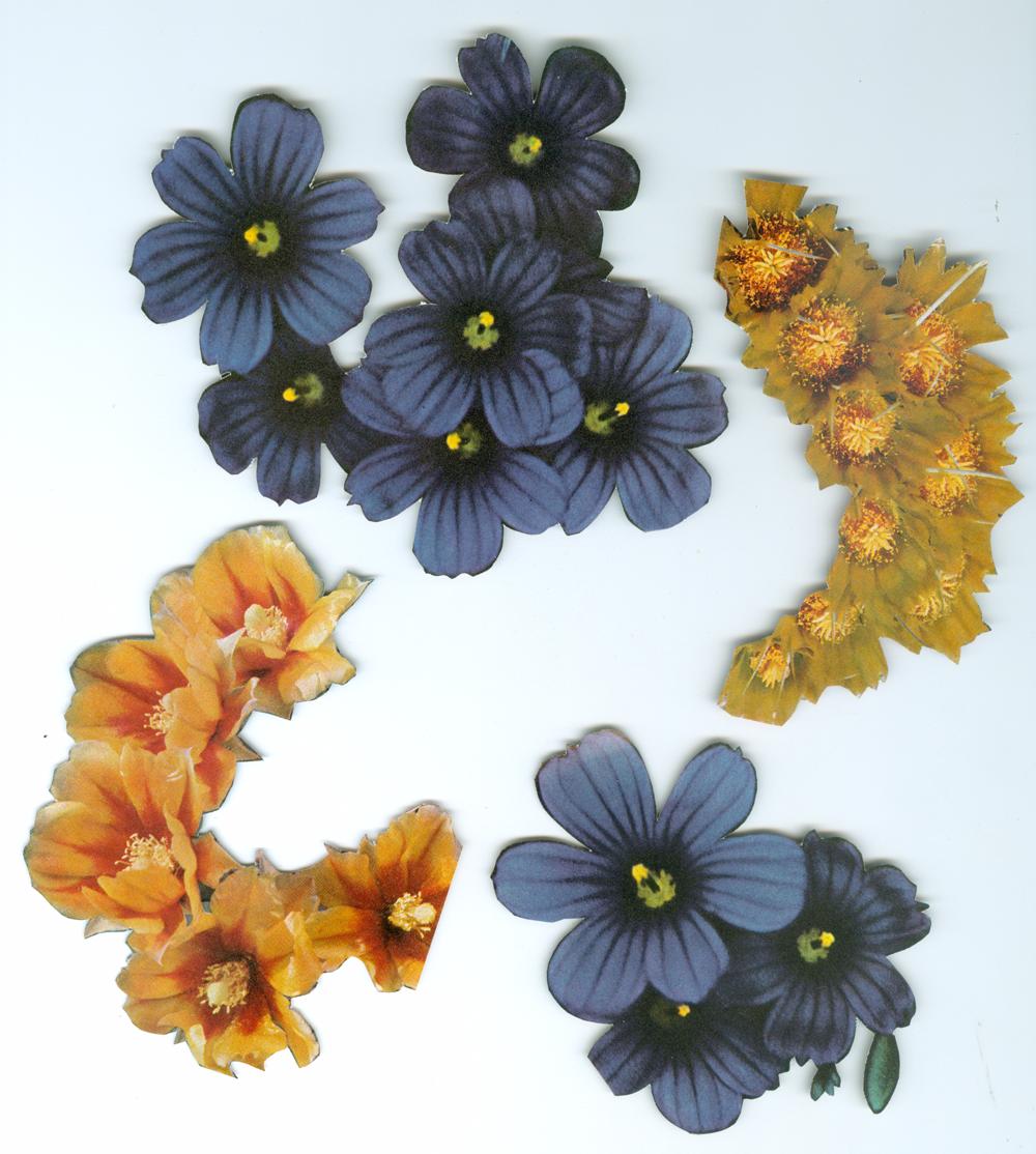 NightMoves_Flowers